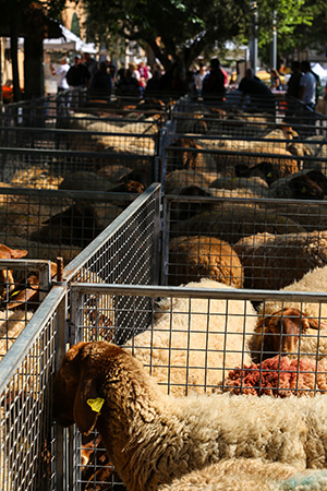 Targ zwierząt w Sineu