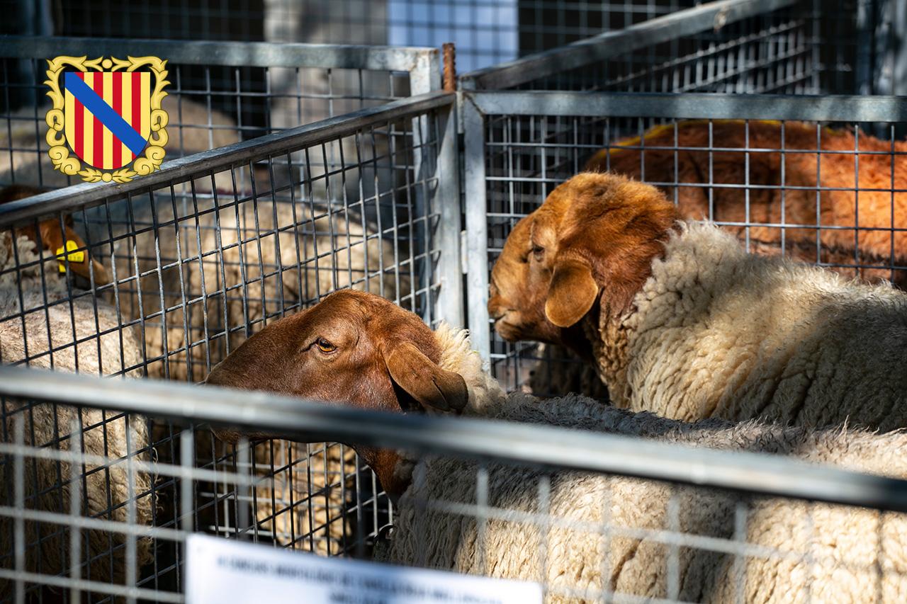 Targ zwierząt w Sineu na Majorce
